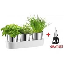 Doniczki na zioła zestaw Auerhahn Herbs + nożyczki do ziół GRATIS